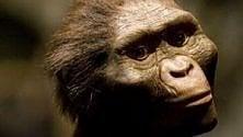 Homo Erectus, la sua dieta era piena di verdure