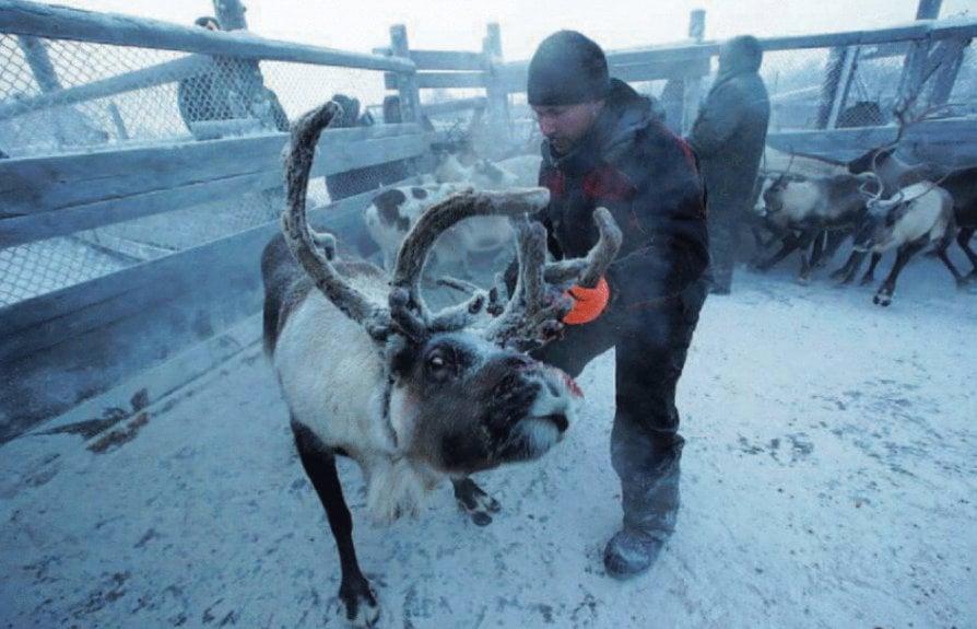 L'ultimo viaggio del popolo delle renne
