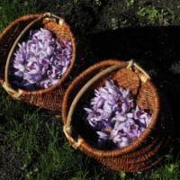 Fili d'oro nella perla delle Alpi: il tesoro degli chef