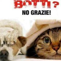 Wwf: ''Stop ai botti di Capodanno: gli animali rischiano la vita''