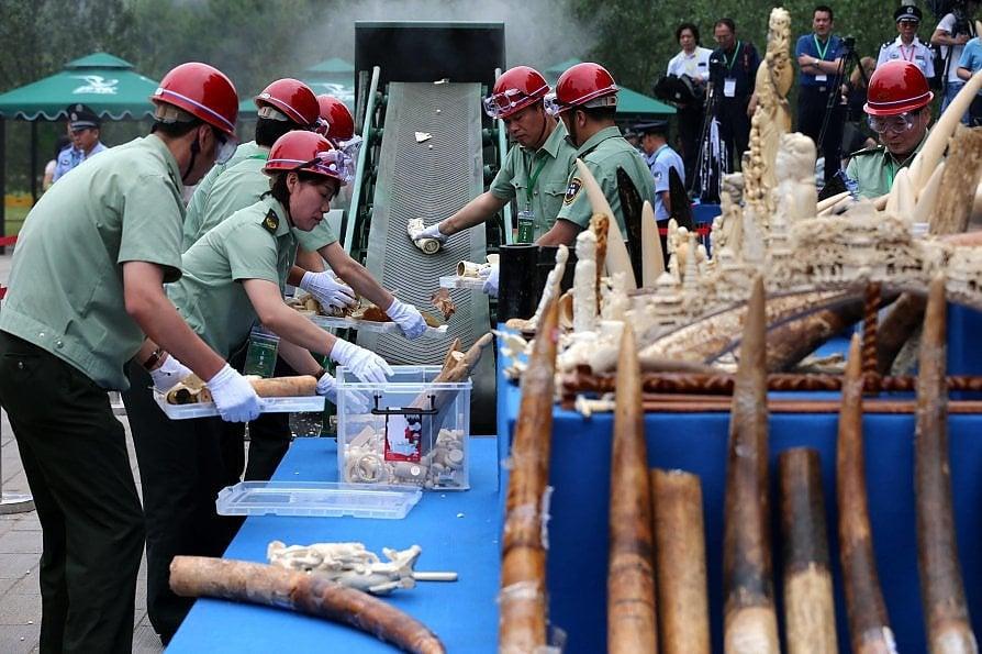 Quel che resta degli elefanti è in mano ai cinesi
