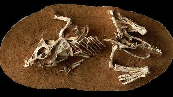 Da tre a sei mesi di incubazione: così nascevano i cuccioli di dinosauro