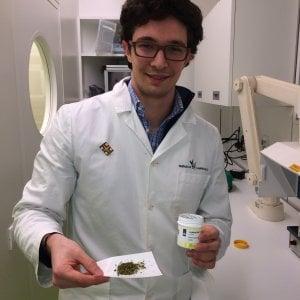 """Cannabis di Stato, il primo farmacista che la venderà: """"Prezzi più bassi di quella olandese"""""""