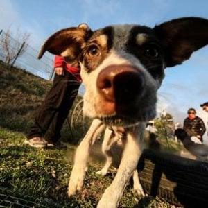 Stress, colpisce anche i cani e ingrigisce i loro peli