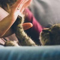 Lo stress negli animali che interagiscono con l'uomo