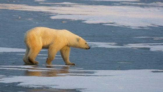 Cambiamenti climatici, diseguaglianze, emarginazione: i rischi più grandi del prossimo decennio