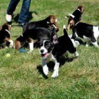 Cani, cosa capiscono quando ci rivolgiamo a loro