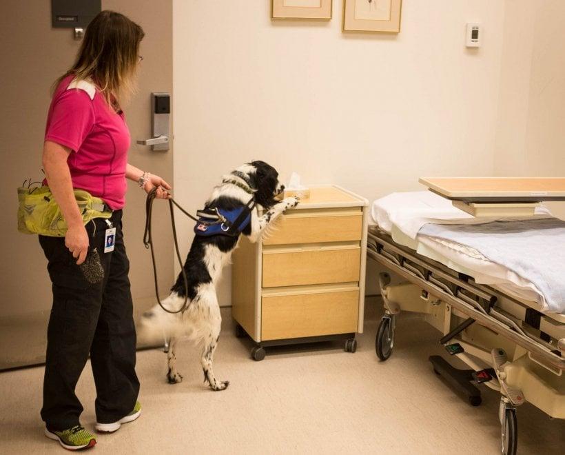 Tumori, emicranie, batteri resistenti: ecco le diagnosi dei cani