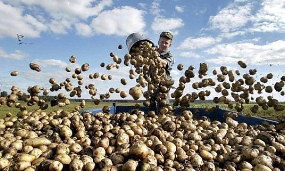 Riflettori puntati sul cibo: un premio giornalistico a favore della sostenibilità alimentare