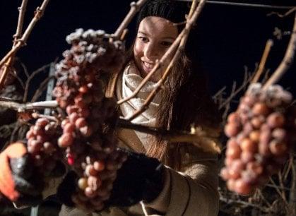 Ecco il calendario del vino: ogni mese una