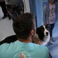 Dottor Angus, il cane che scova i superbatteri