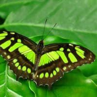 Allarme insetticidi anche per bombi, farfalle e uccelli