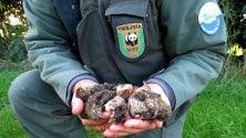 Con il grande freddo bracconieri scatenati Wwf: ''Stop alla caccia''