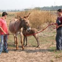 Latte di asina amiatina per i bimbi allergici a quello di mucca