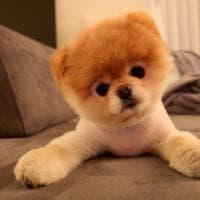 Instagram, i cani più celebri