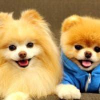 I cani protagonisti sui social: li postiamo (quasi) una volta al giorno