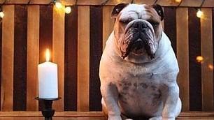 I cani protagonisti sui social: li postiamo una volta al giorno   Le star