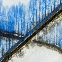 Germania, illusione ottica sulla neve: le ombre degli alberi sono blu