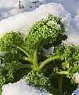 Neve e gelo fanno impennare i prezzi degli ortaggi