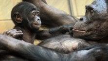 Metà dei primati a rischio estinzione per malattie, clima e agricoltura