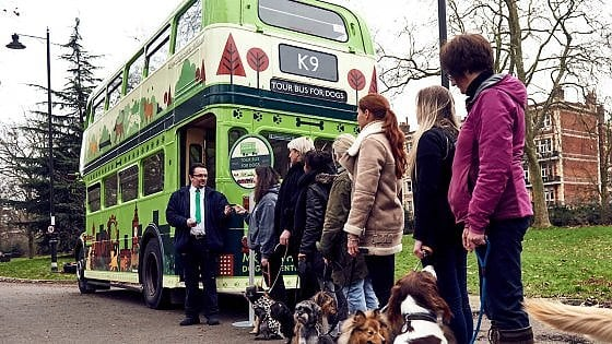"A Londra il primo city bus tour ""riservato"" ai cani"