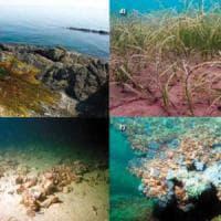 Un terzo degli habitat europei a rischio così spariscono paludi, praterie