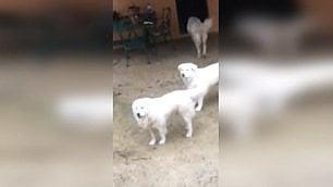 Rigopiano, salvi i cani dell'hotel   Ecco la loro nuova casa    Quando giocavano nella neve