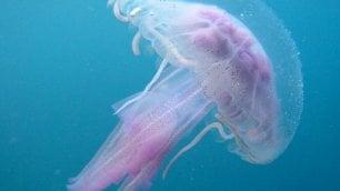 Animali letali e dove trovarli tra cavalli, ragni e meduse