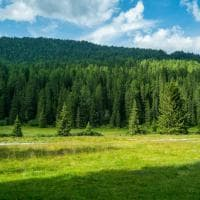 "La Natura Smart in Trentino: arriva la ""foresta intelligente"""