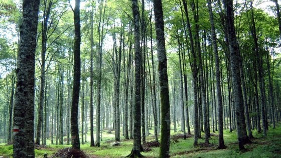 Dove andar per funghi o in bici ce lo dice l'app. È la smart forest
