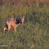 I lupi salvati dal Centro Monte Adone