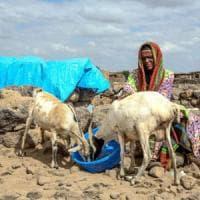 Corno d'Africa, milioni di persone fuggono per non affrontare la carenza