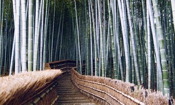 Giardino Zen Buddismo : Kyoto e nara giappone antico zen repubblica