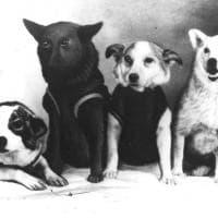 Russia, cani nello spazio: i documenti inediti