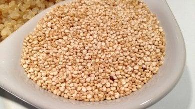 """Mappato il Dna della quinoa """"Può aiutare a sfamare il mondo"""""""