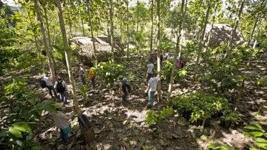 Ecosia, il motore di ricerca  ha piantato 6 milioni di alberi