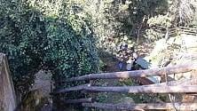 Giardino segreto sotto la città: è la foresta urbana salvata dai volontari