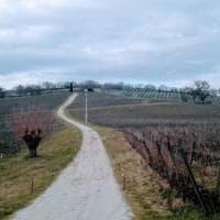 Tra uliveti e vigne. Itinerario nel cuore dell'Umbria