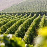 Venezia celebra lo Champagne: lusso, tradizione e versatilità