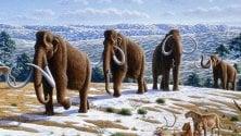 ''Il mammut lanoso? Rinascerà in laboratorio''
