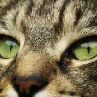 Il vero padrone in casa è lui: il gatto. ''Ecco come ci ha addomesticati''