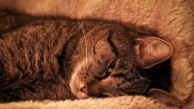 Il gatto, vero padrone di casa  ''Così ci ha addomesticati''