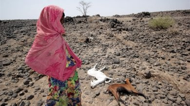 "Somalia, la siccità devasta il paese  ""E' urgente salvare vite umane"""