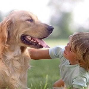I cani e le scimmie preferiscono le persone gentili