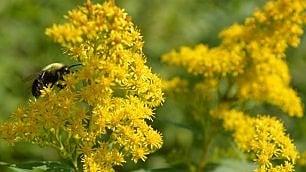 Nasce il paradiso delle api: una città in fiore per salvarle