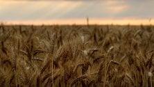 """Coldiretti: """"Crollano le semine. Pasta italiana  a rischio con il Ceta"""""""