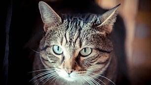 Il gatto, vero padrone di casa.  ''Così ci ha addomesticati''
