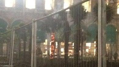 Milano, palma data alle fiamme   bruciata una pianta nella notte  foto