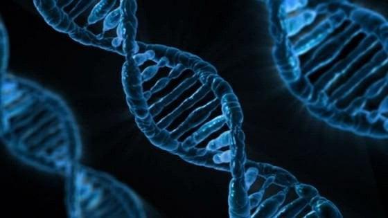 Decifrato il genoma dei tumori neuroendocrini del pancreas: individuati altri tre geni coinvolti