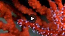 Corsica, Riserva di Scandola i giardini di corallo
